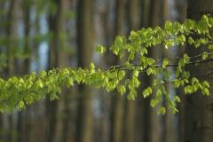 Bladeren aan een tak